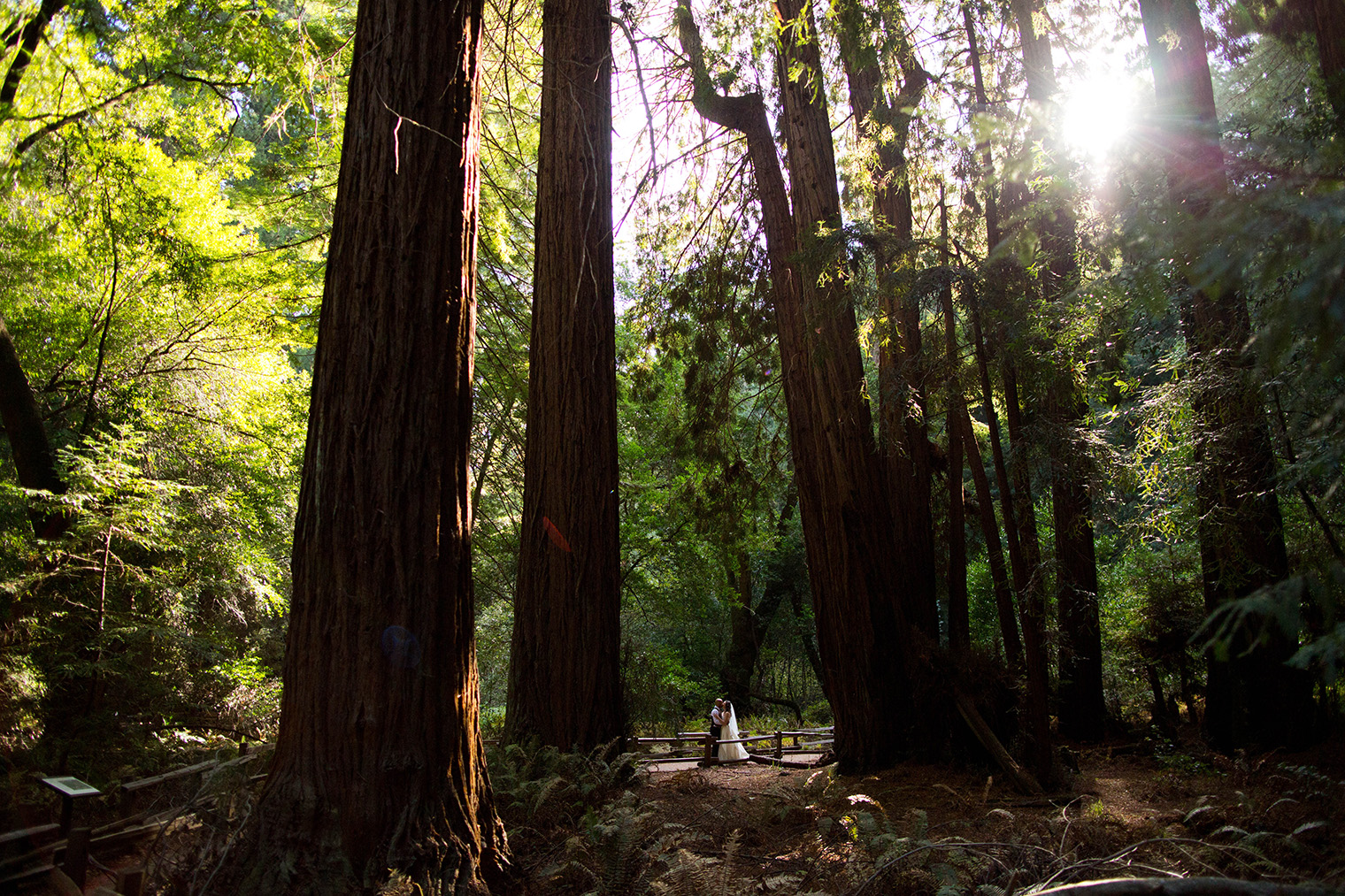 muir woods _155