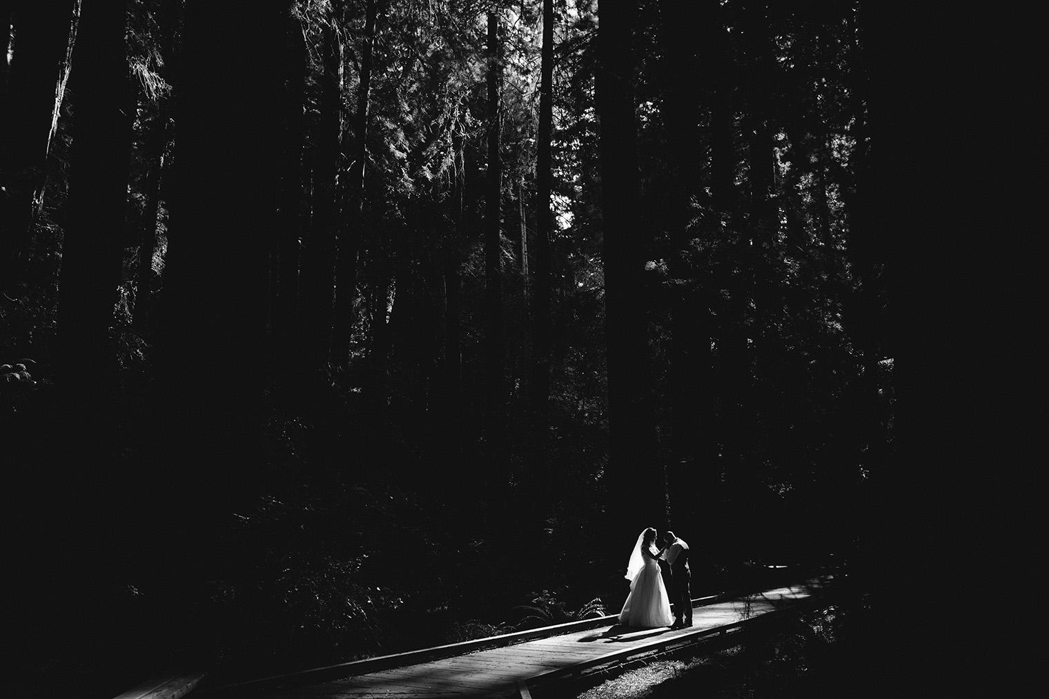 muir woods bw_121