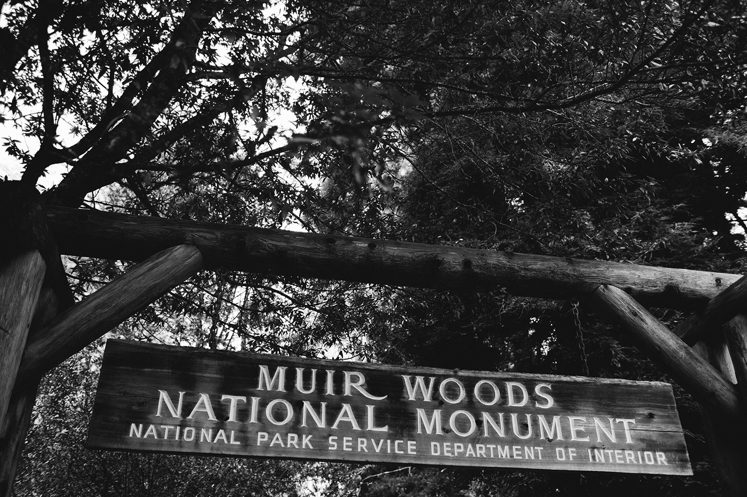 muir woods bw_176