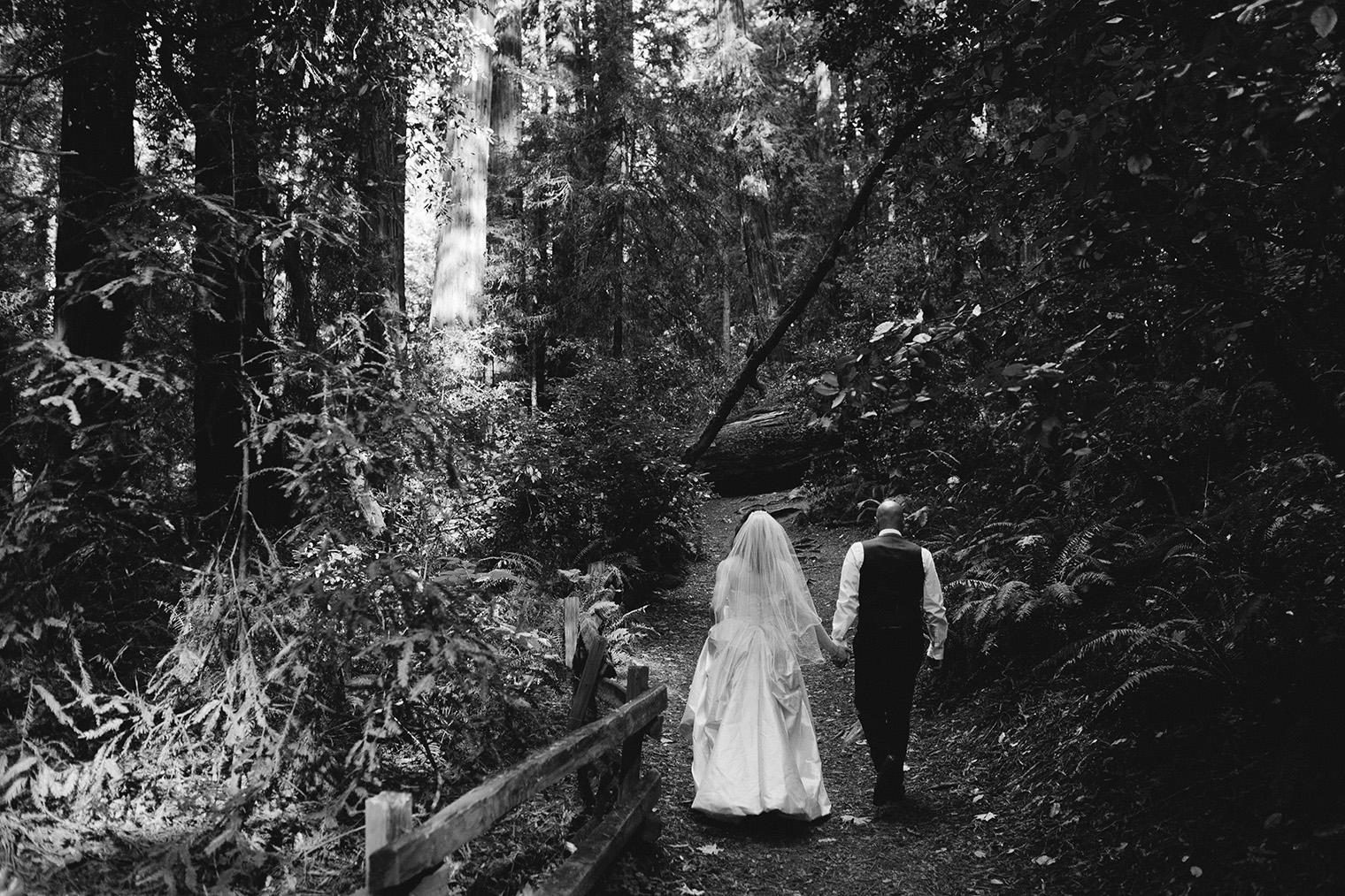 muir woods bw_65