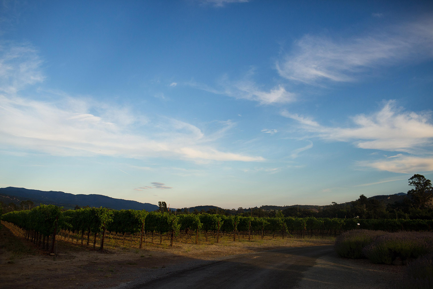 santa rosa vineyard wedding photos
