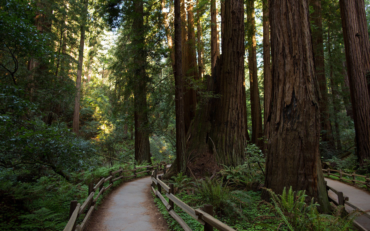Muir Woods Proposal