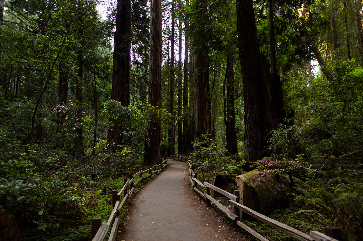 Proposal at Muir Woods National Monument