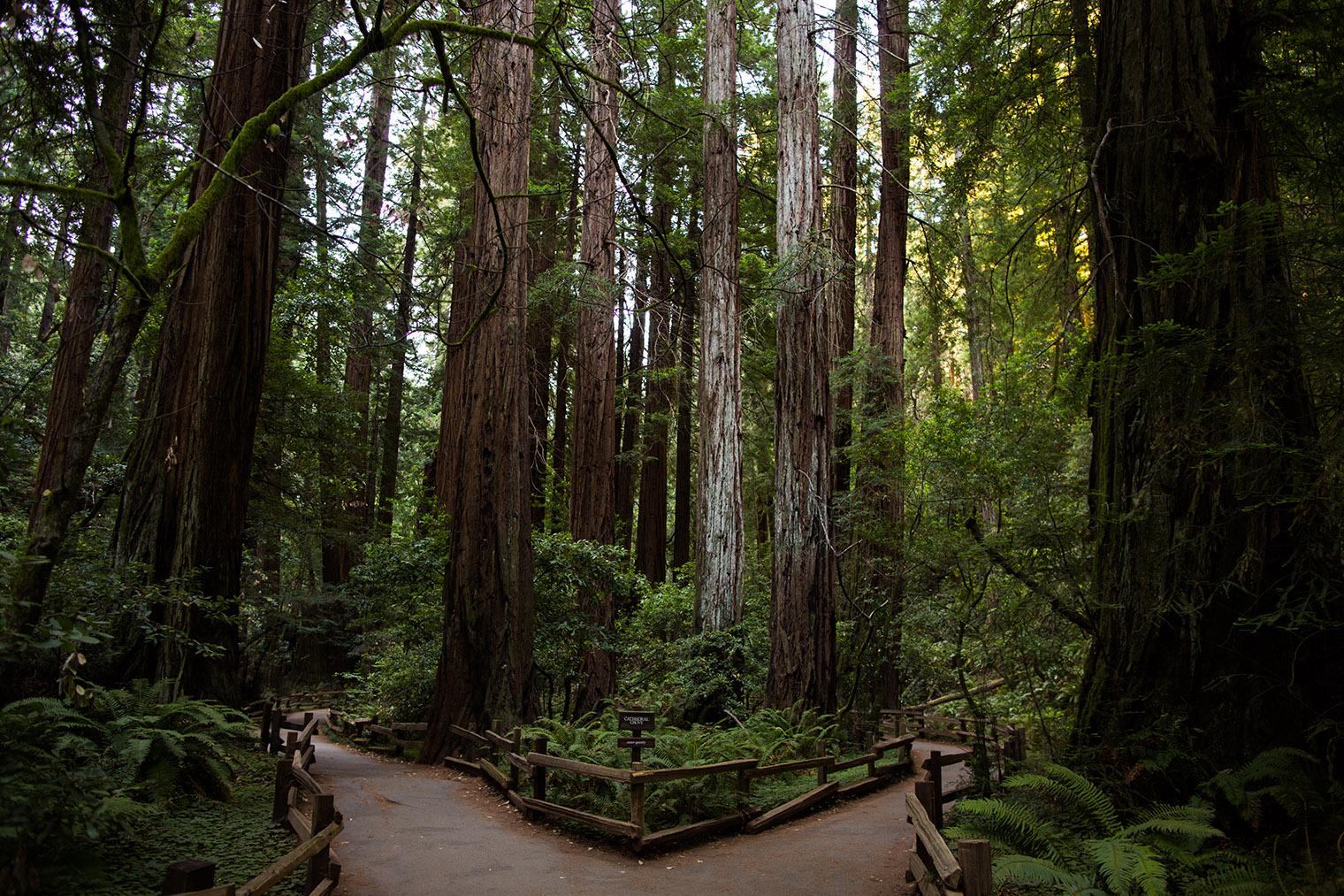 Proposal at Muir Woods
