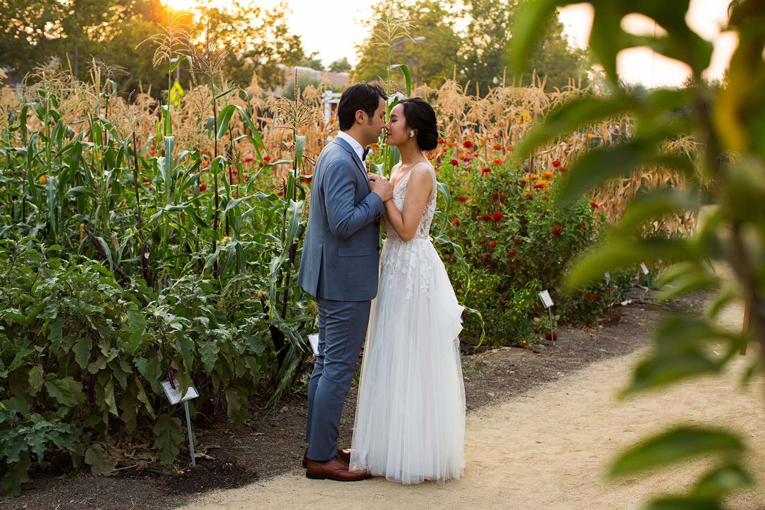 Farmstead at Long Meadow Ranch sunset wedding portraits